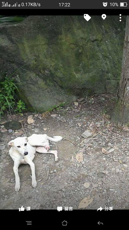 Cera Dog Rescue Vancouver