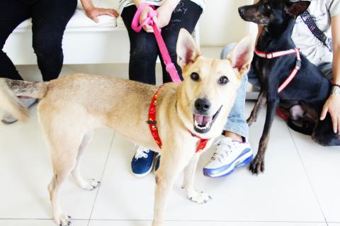 Naive Dog Rescue Foster